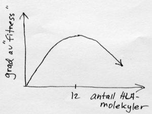"""Det er en klokkeformet sammeheng mellom grad av """"fitness"""" (altså evne til å overleve og få levedyktige barn) og antall HLA-molekyler"""