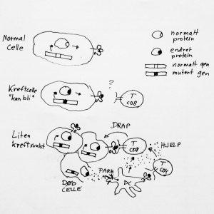 """""""Alle"""" proteiner inne i en celle vil bli vist fram på overflaten av cellen som peptider bundet til HLA-molekyler. Hvis et protein endres som følge av en genmutasjon, kan dette gi nye peptid/HLA komplekser på celleoverflaten. T-cellene trenger imidlertid tilleggsinformasjon om mulig fare for å reagere. Faresignaler kan komme iforbindelse med celledød, hvis kreftceller dør av sult eller kreftbehandling."""