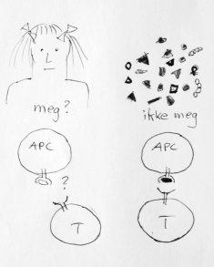 """Immunforsvarets T-celler må være sikre på hva som er """"meg"""", og hva som er """"ikke meg""""."""
