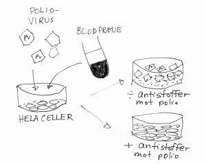 Test for antistoff mot poliovirus: HeLa celler tilsettes virus og blodserum. Hvis blodet inneholder anstistoffer blir viruset nøytralisert og cellene vokser. Uten antistoffer blir HeLa cellene drept av viruset.
