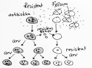 Mikrober kan bli resistente mot antibiotika gjennom naturlig utvalg av mikrober som allerede er resistente, eller gjennom overføring av resistensgener på tvers.